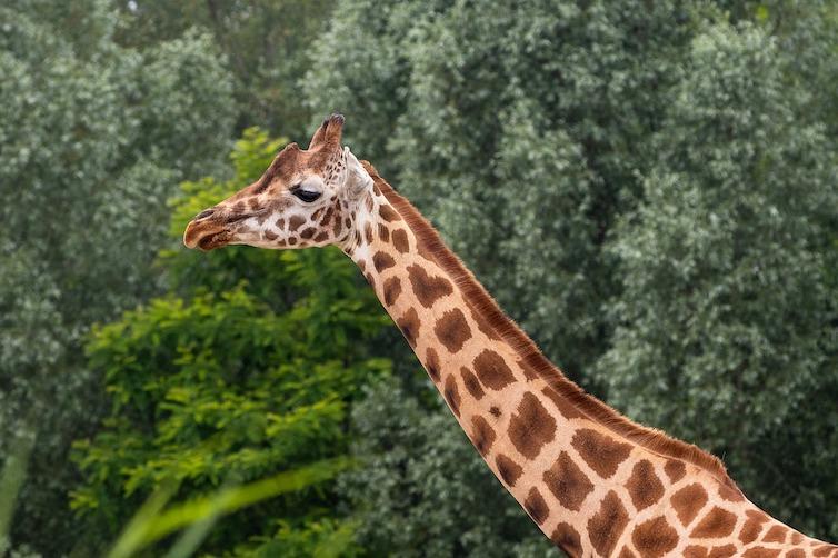 zoo-5301038_1280